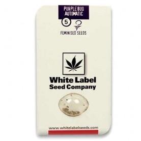 Purple Bud Automatic (5 semienok) - Semená marihuany White Label Seed Company
