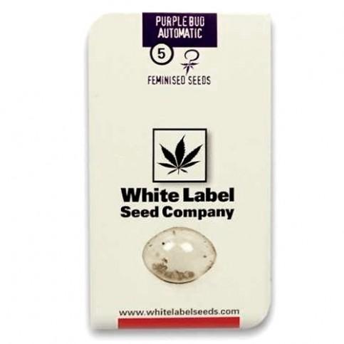PURPLE BUD AUTOMATIC (3 semienka) White Label