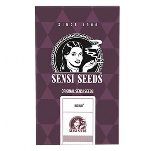 Semená marihuany Sensi Seeds: Big Bud Feminised (3 semienka)