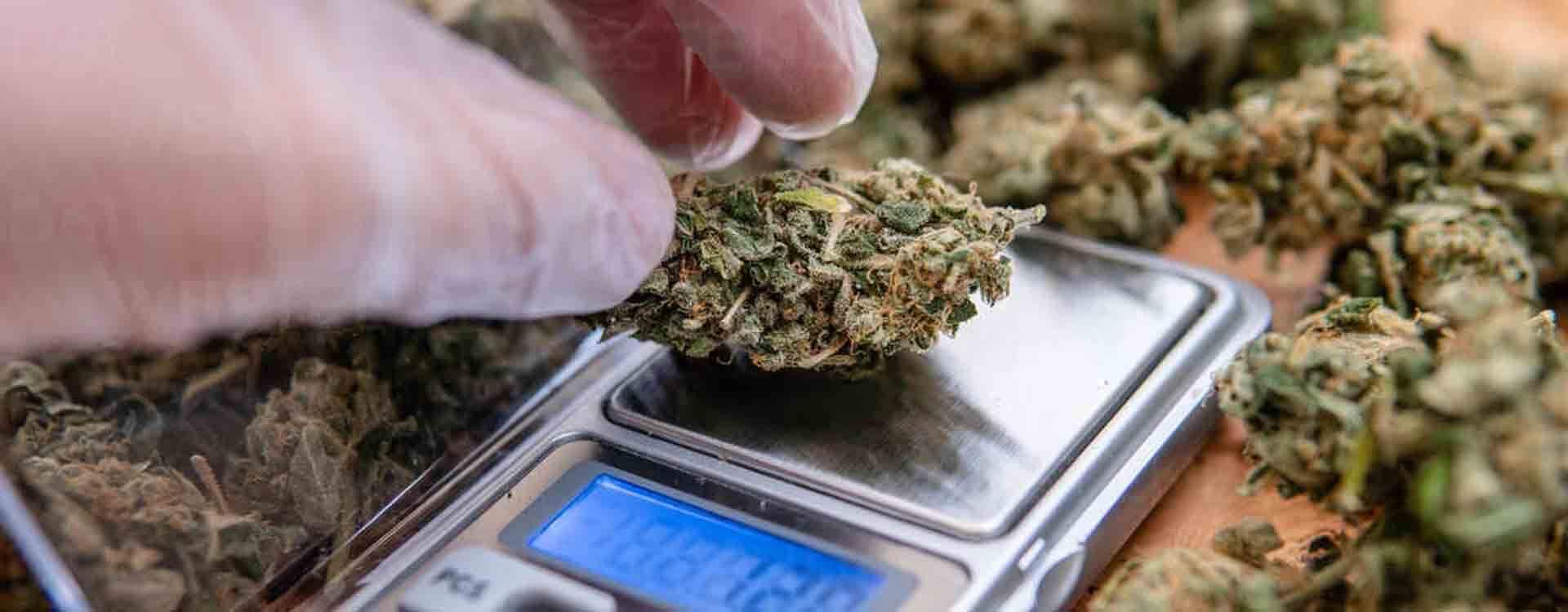 Váženie kvetov marihuany