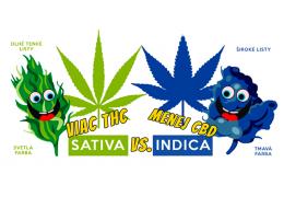 Sativa vs. Indica - Aký je rozdiel medzi týmito konopnými odrodami