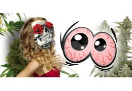 Fajčenie marihuany a nepríjemné červené oči. Ako sa ich zbaviť?