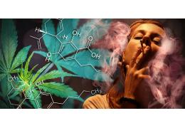 Aký je rozdiel medzi THC a CBD?